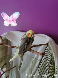 Bird lost - Kildare