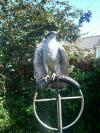 Bird lost - Dublin