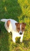 Dog lost - Monaghan