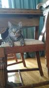 Cat lost - Westmeath