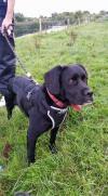 Dog lost - Kildare