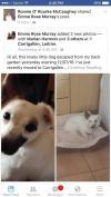 Dog lost - Leitrim