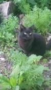 Cat lost - Galway