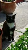 Cat lost - Cork