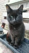Cat lost - Wexford