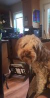 Dog lost - Dublin