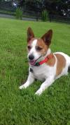 Dog lost - Tipperary
