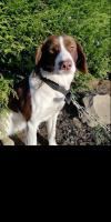 Dog lost - Kilkenny