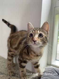 Cat found - Kildare