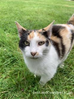 Cat found - Wicklow