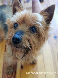 Dog found - Louth