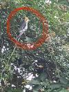 Bird found - Dublin
