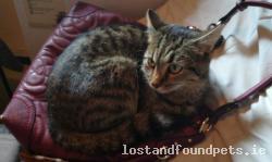 Cat lost - Clare