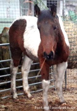 Horse lost - Clare