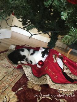 Cat lost - Meath
