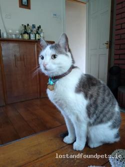 Cat lost - Leitrim