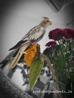 Bird lost - Meath