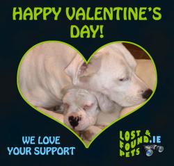Happy Valentine's Day animal lovers